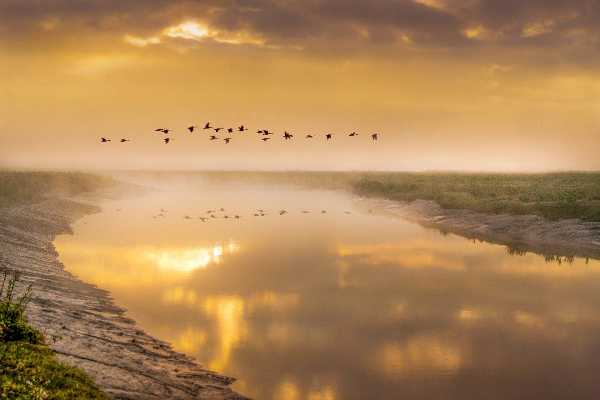 Vögel am Himmel